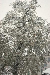 Montese neve 23 novembre 2013